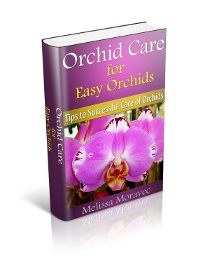 Orchid Care for Easy Orchids