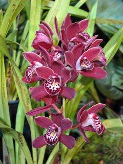 Orchids Fall Season