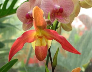 Orchid Myths: Gems Of The Orchid World